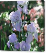 Laughing Iris Canvas Print