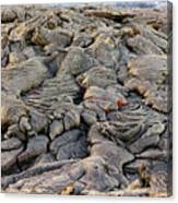 Lava Peeking At Us Canvas Print