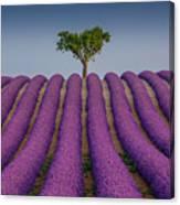 Lavander Field Luberon Canvas Print