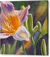 Lavender And Gold Lily Canvas Print