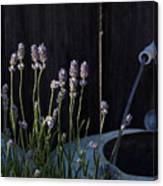 Lavender And Watering Can Canvas Print