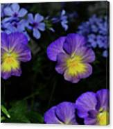 Lavender And Yellow Pansies Canvas Print