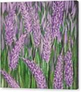 Lavender Blooms Canvas Print