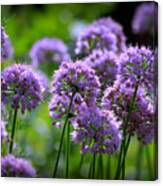 Lavender Breeze Canvas Print