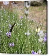 Lavender Butterflies Canvas Print
