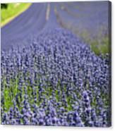 Lavender Dreams Canvas Print