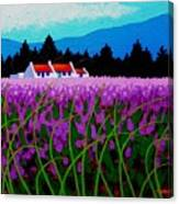 Lavender Field - County Wicklow - Ireland Canvas Print