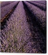 Lavender Field Provence France Canvas Print