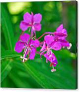Lavender Fireweed Canvas Print
