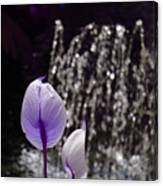 Lavender Flower At Fountain Canvas Print