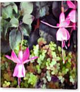 Lavender Fuchsias Just Hanging Around The Garden Canvas Print