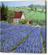 Lavender Hill Canvas Print