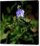 Lavender Hue Canvas Print