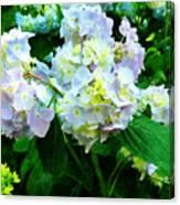 Lavender Hydrangea In Garden Canvas Print