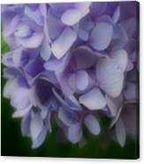 Lavender Hydrangea Canvas Print