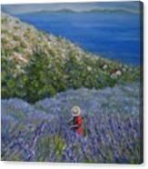 Lavender In Full  Bloom Canvas Print