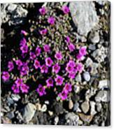 Lavender In The Rocks Canvas Print