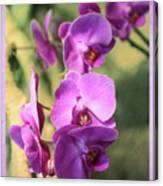 Lavender Orchids Canvas Print