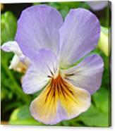 Lavender Pansy Canvas Print