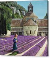 Lavender Picker - Abbaye Senanque - Provence Canvas Print