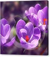 Lavender Spring Canvas Print