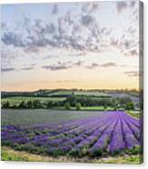 Lavender Sunset Panorama Canvas Print