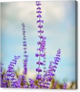 Lavender To The Sky Canvas Print