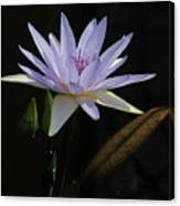 Lavender Tropical Water Lily Canvas Print