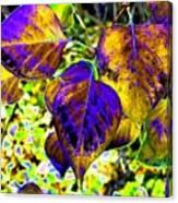 Lavish Leaves 3 Canvas Print