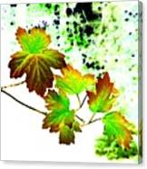 Lavish Leaves 4 Canvas Print
