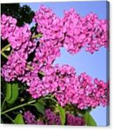 Lavish Lilacs Canvas Print
