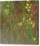 Lay In The Meadow Canvas Print