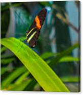 Lazy Butterfly Canvas Print