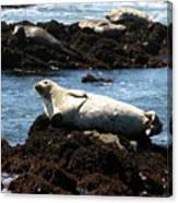 Lazy Seal Canvas Print