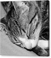 Lea Sleepy Cat Canvas Print