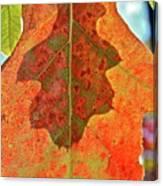 Leaf Behind Canvas Print