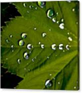 Leaf Covered In Raindrops Canvas Print