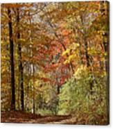 Leaf Covered Path Canvas Print