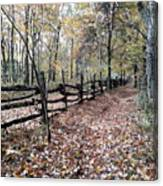 Leaf Covered Trail Canvas Print