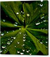 Leaf Covered With Water Droplets Canvas Print