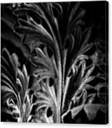 Leaf Detail 2 Black And White Canvas Print