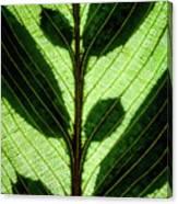 Leaf Detail Canvas Print