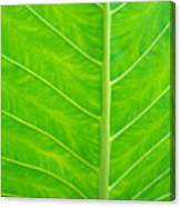 Leaf Detail Canvas Print