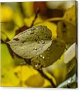 Leaf Dew Canvas Print