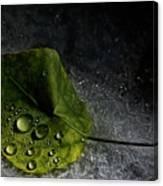 Leaf Droplets Canvas Print