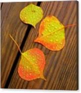 Leaf Drops 2 Canvas Print