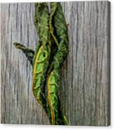 Leaf Entwined Canvas Print