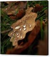 Leaf In Autumn. Canvas Print