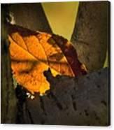 Leaf In Fork Canvas Print