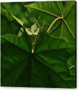 Leaf In The Middle Canvas Print